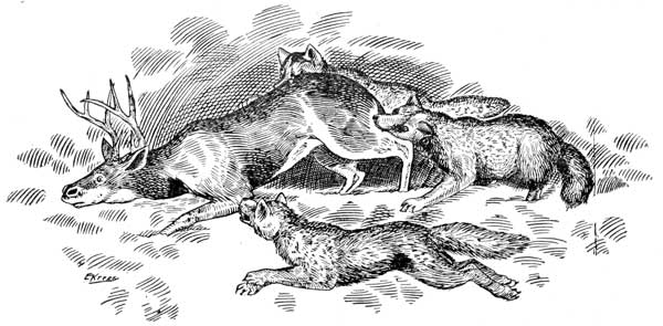 """""""The wolf's method of attack is from the rear, springing on its victim and hamstringing it and literally eating it alive"""""""